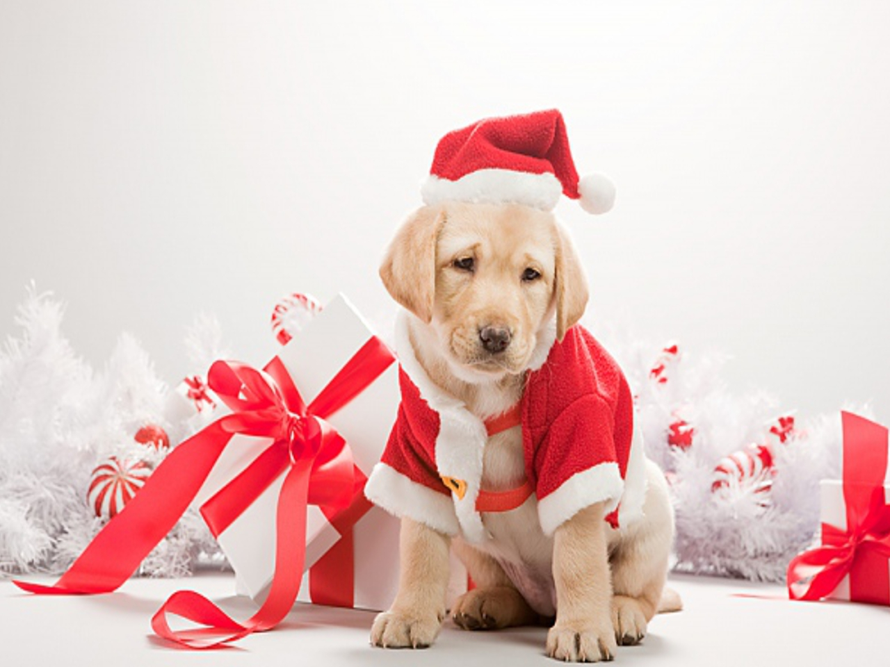 Christmas-Dog-Pictures-1-10