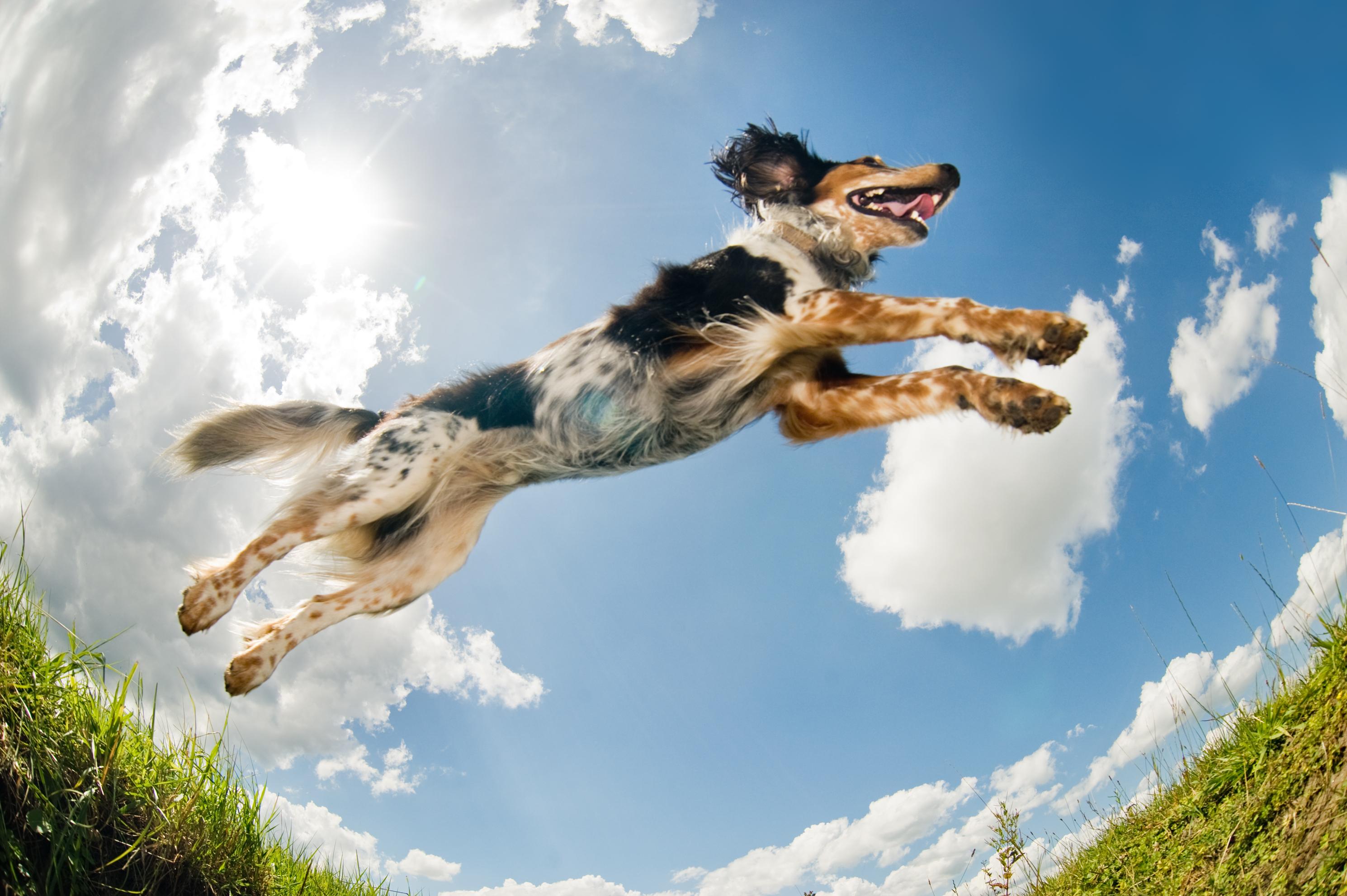 Jumping dog                                  (A Lobke Peers)