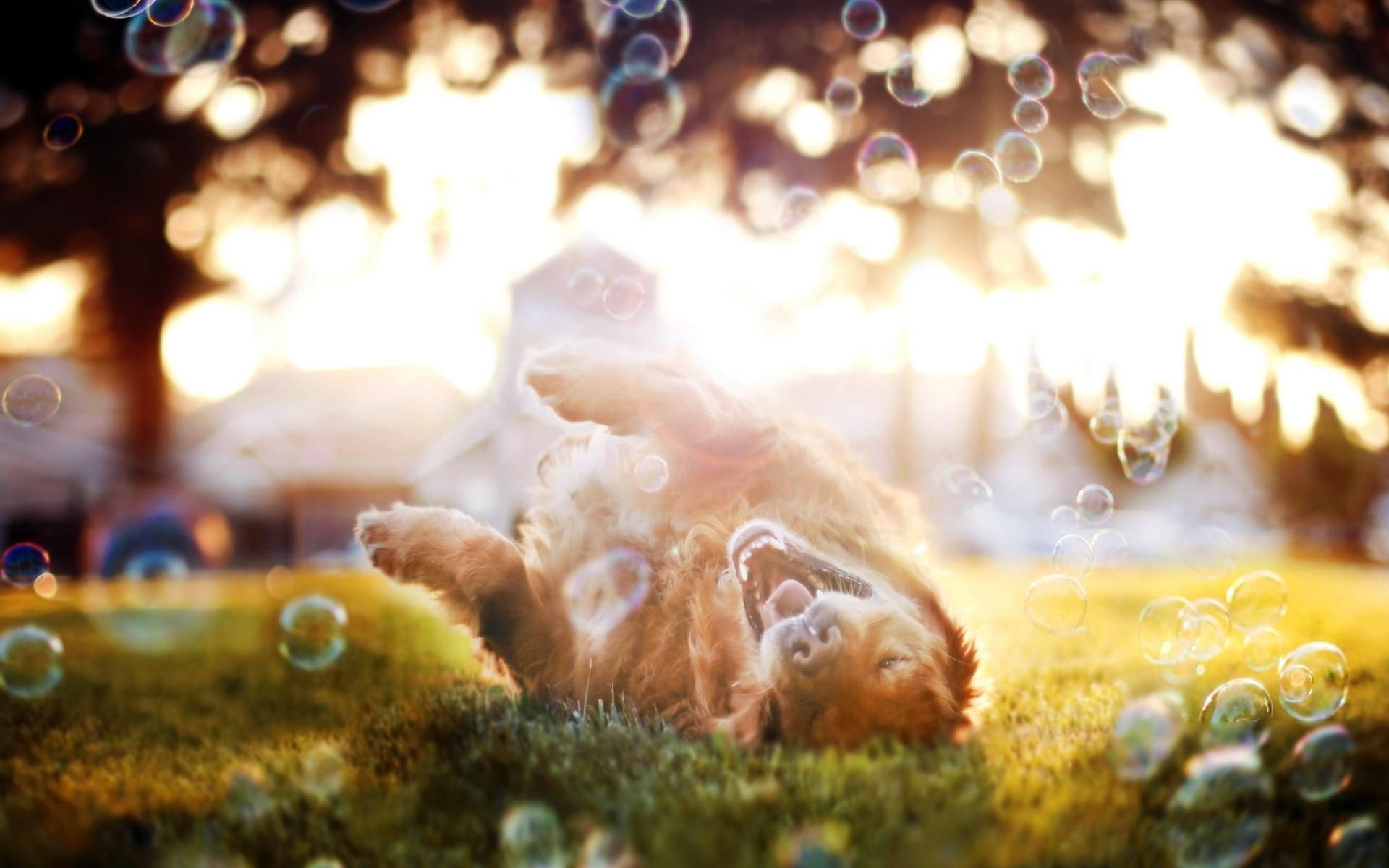 dog_bubbles_playful_sunshine_hd-wallpaper-86856