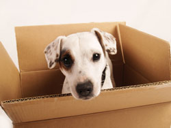 dog_in_a_box_250